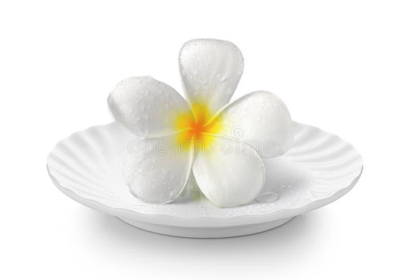 Tropischer Blumen Frangipani in der weißen Platte auf weißem Hintergrund lizenzfreie stockfotografie
