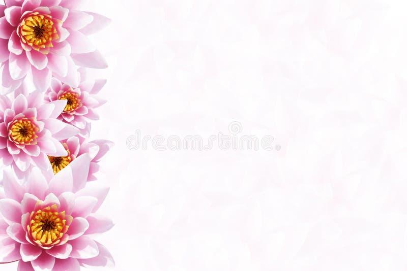 Tropischer Blumen-Hintergrund stockbild