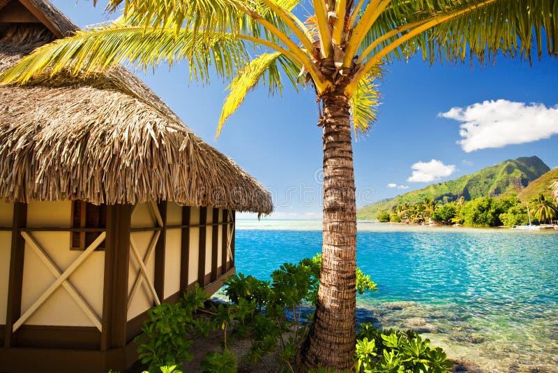 Tropischer Bungalow und Palme lizenzfreie stockfotografie