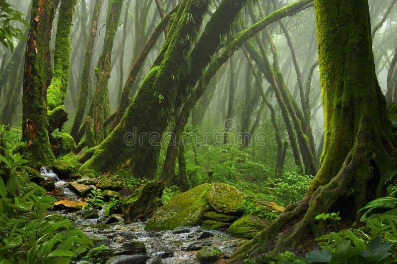 Download Tropischer Dschungel stockfoto. Bild von tanne, buddhismus - 96932974