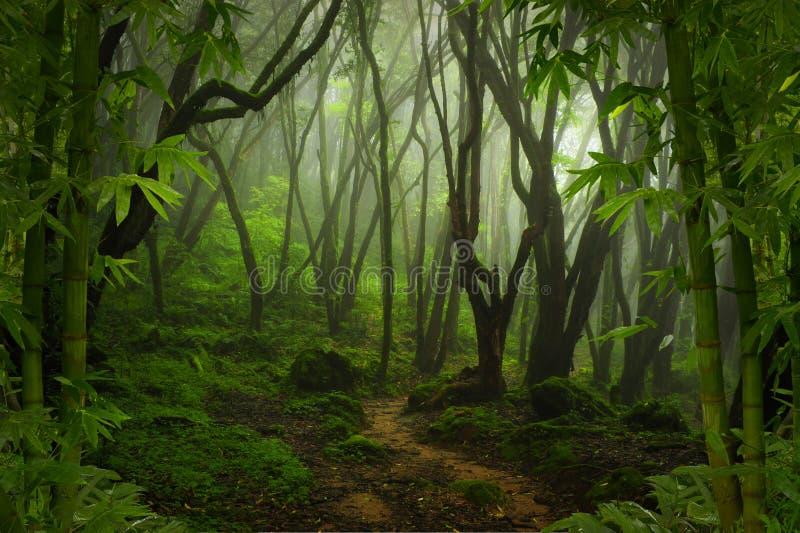 Download Tropischer Dschungel stockfoto. Bild von landschaft, fluß - 96933030