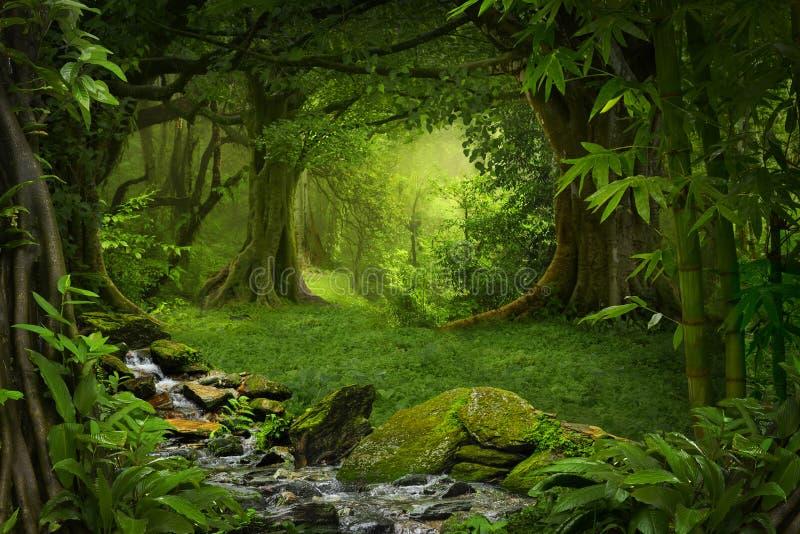 Download Tropischer Dschungel stockfoto. Bild von wurzeln, moos - 96933184
