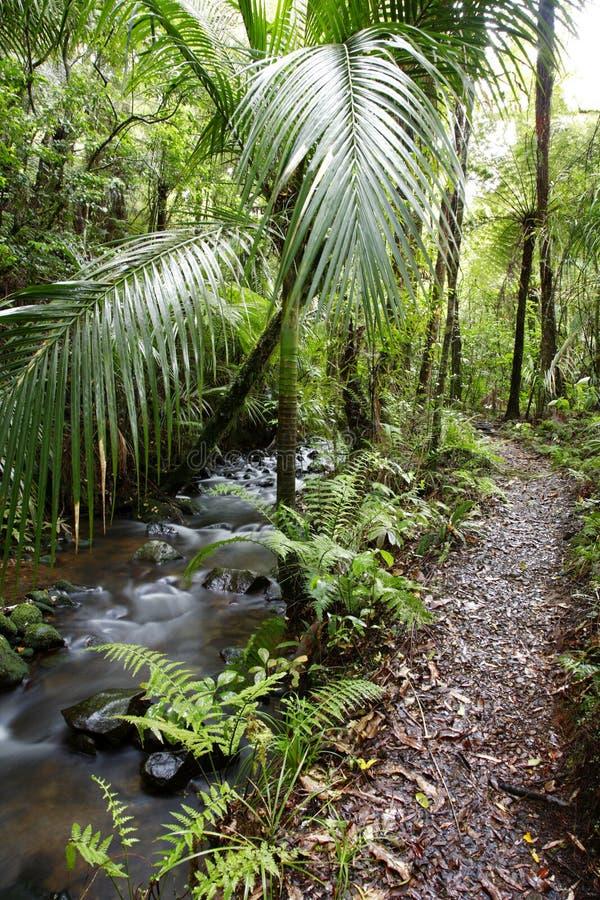 Tropischer Dschungel-Pfad stockfotos