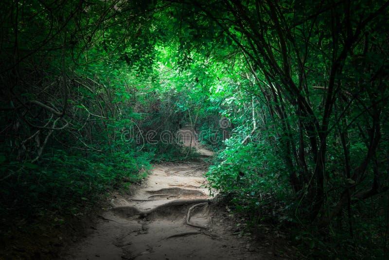 Tropischer Dschungelwald der Fantasie mit Tunnel- und Wegweise stockfotografie