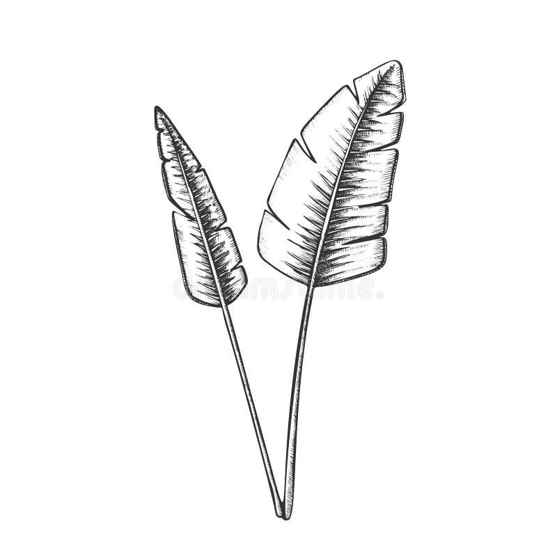 Tropischer exotischer Bush lässt Hand gezogenen Vektor vektor abbildung