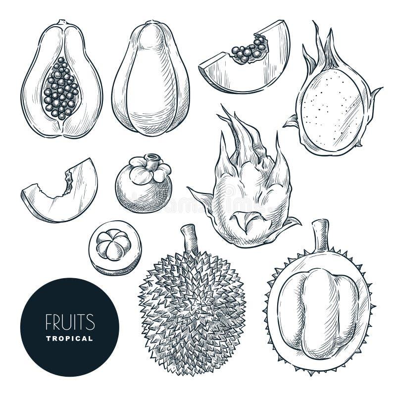Tropischer exotischer Fruchtsatz, lokalisiert auf weißem Hintergrund Vektorskizzenillustration und -Gestaltungselemente Tropisch stock abbildung