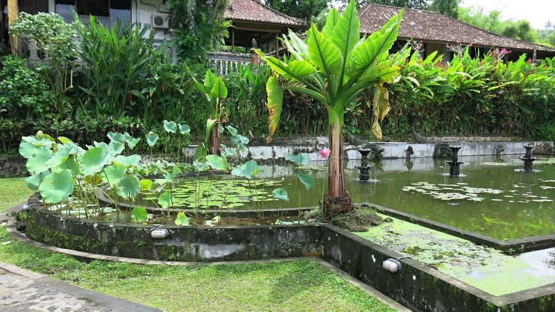 Tropischer Garten mit Bananenstauden und vielen bunten Blumen Wasserbehälter mit Karpfen stockbilder