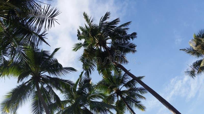 Tropischer Himmel stockfotos
