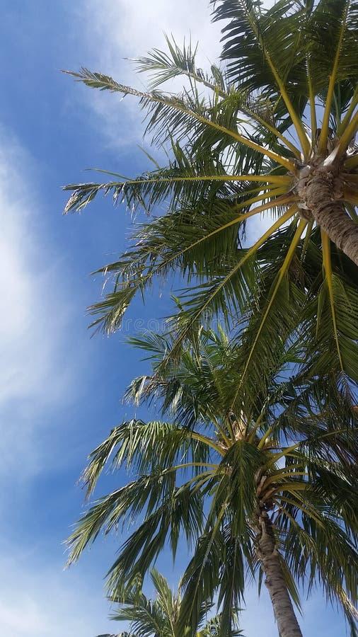 Tropischer Himmel lizenzfreie stockfotos