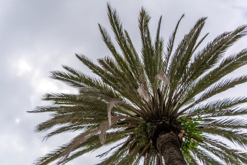 Tropischer Hintergrund mit Palme lizenzfreie stockbilder