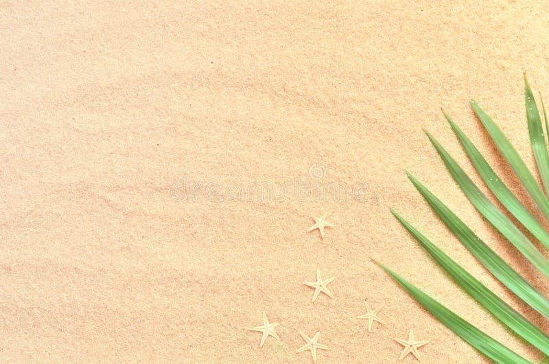 Tropischer Hintergrund Palmenbaumast mit Starfish auf sandigem Hintergrund Reise Kopieren Sie Platz stockbilder