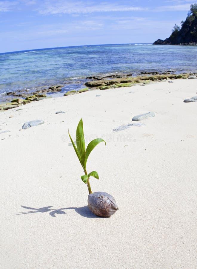 Tropischer Insel-Strand Fidschi stockfotografie