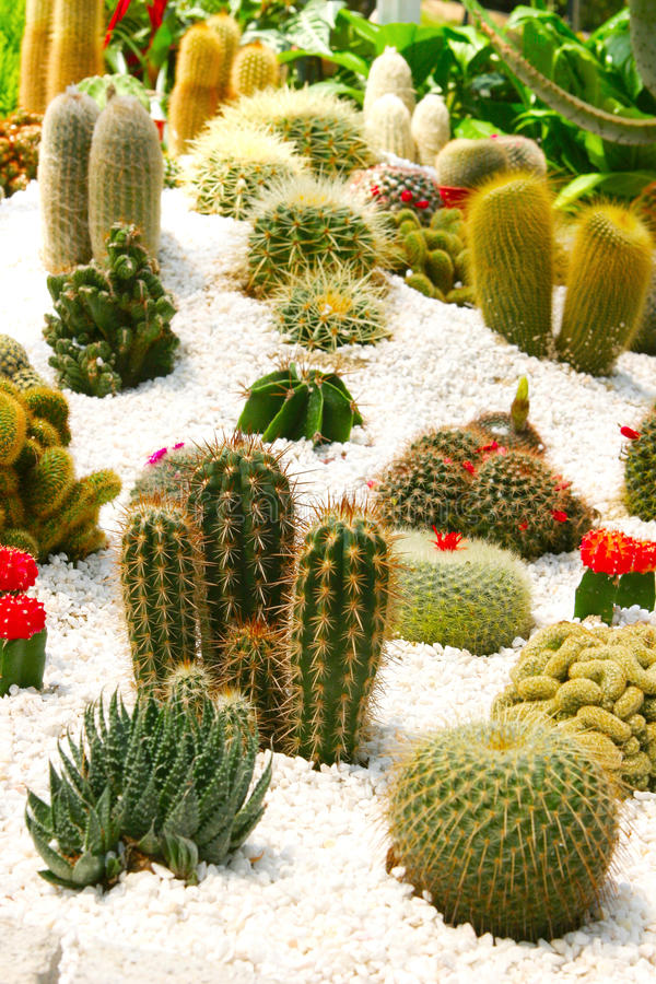 Tropischer Kaktus-Zen-Garten lizenzfreies stockbild