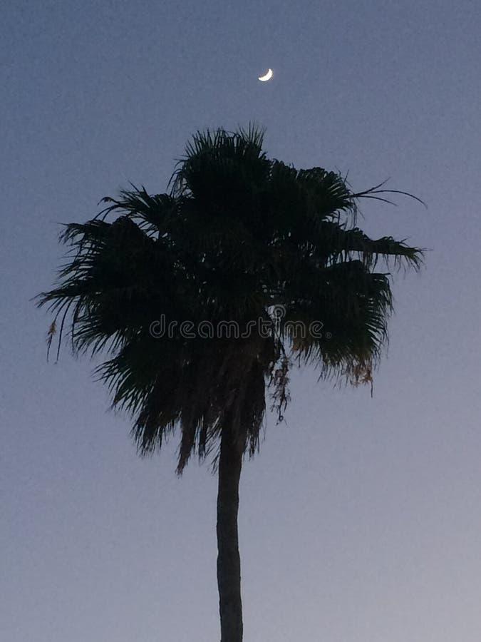 Tropischer Mond lizenzfreie stockbilder