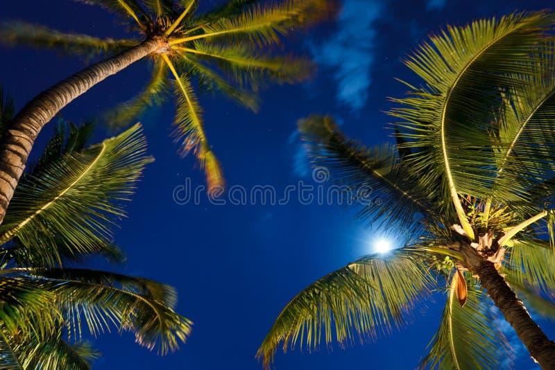 Tropischer nächtlicher Himmel stockbilder