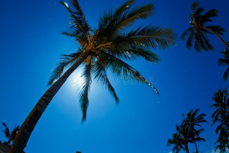 Tropischer nächtlicher Himmel stockfotografie