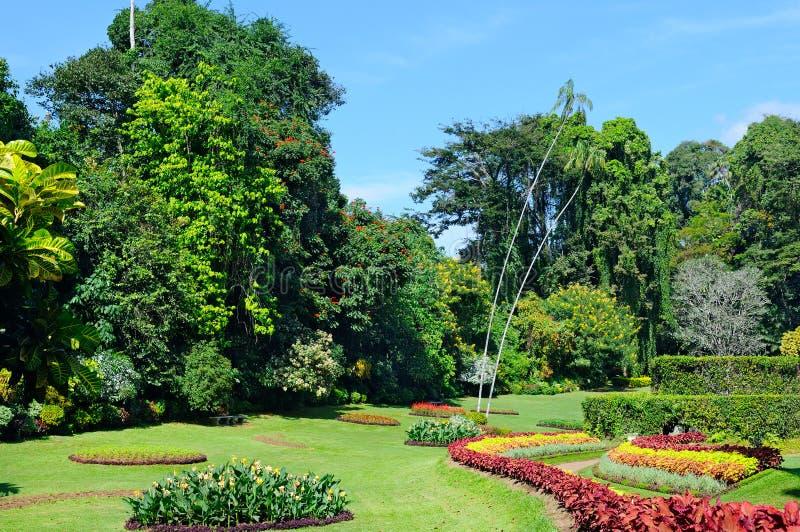 tropischer Park mit Blumenbeeten, Rasen und Bäumen stockfotografie