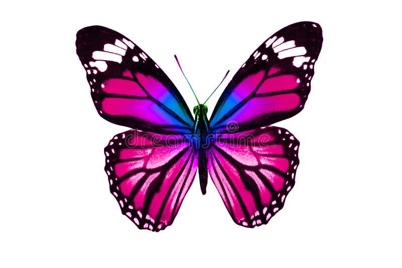 Tropischer purpurroter Schmetterling Getrennt auf weißem Hintergrund lizenzfreie stockfotos