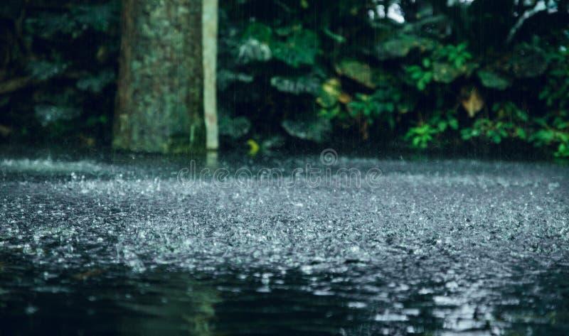 Tropischer Regen im Wasser lizenzfreie stockfotos