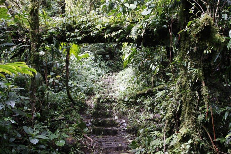 Tropischer Regenwald (Costa Rica) lizenzfreies stockbild