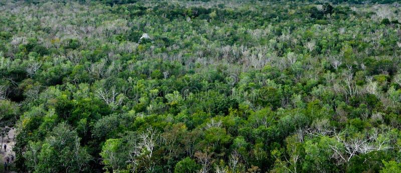 Tropischer Regenwald-Hintergrund stockfotos