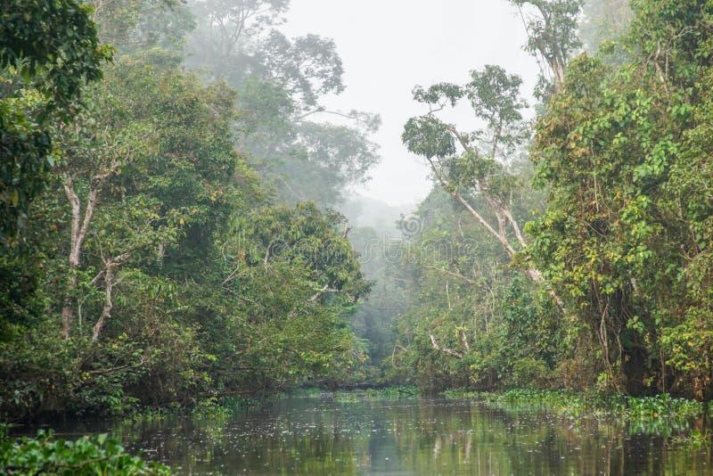 Tropischer Regenwald im Nebel lizenzfreies stockfoto