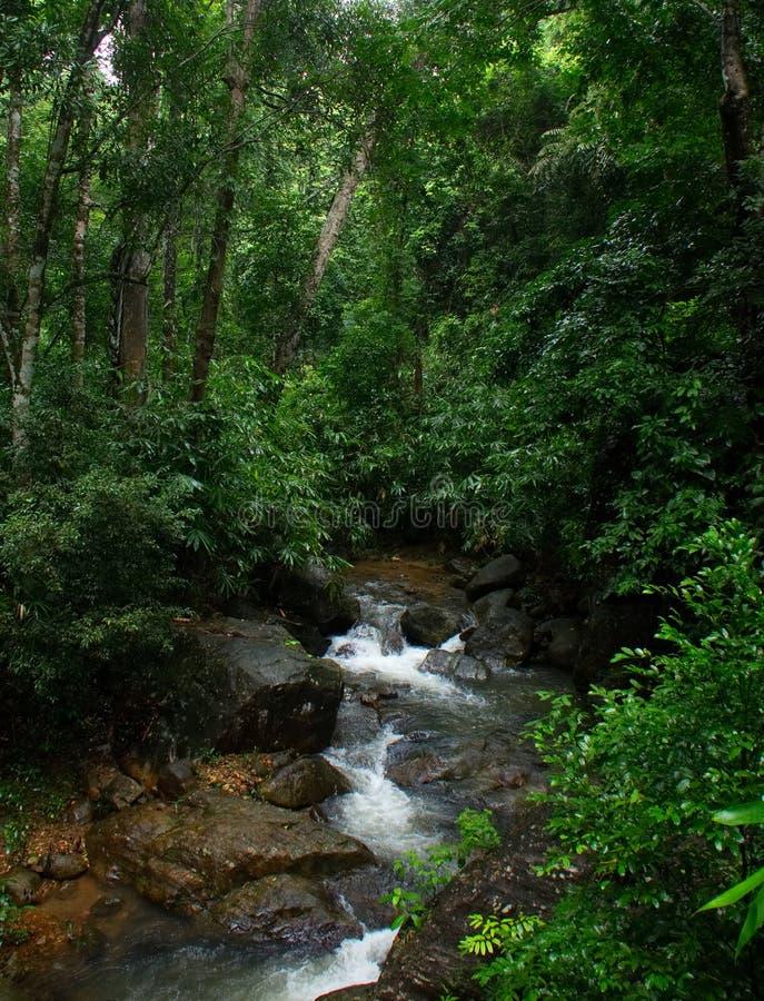 Tropischer Regenwald während des Regens stockfotografie