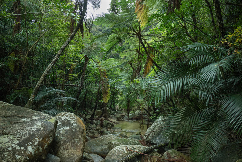 Tropischer Regenwalddschungel, Ishigaki-Insel, Okinawa, Japan stockfoto