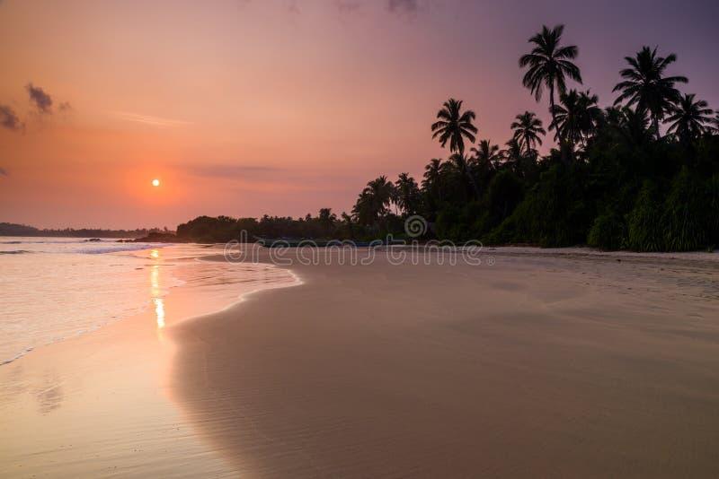 Tropischer sandiger Strand mit Palmen bei Sonnenuntergang stockfotos