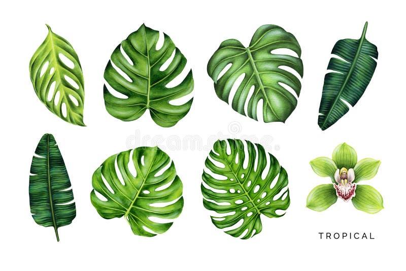 Tropischer Satz Grünblätter und Orchideenblume stockbild