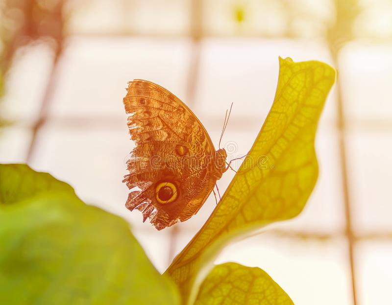 Tropischer Schmetterling stockfotografie