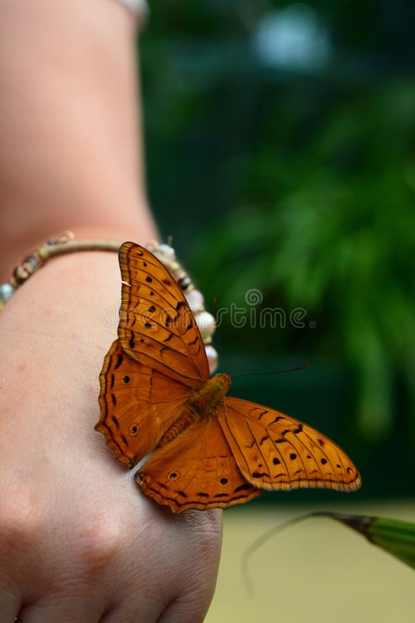 Tropischer Schmetterling Wild lebende Tiere Sydney Zoo New South Wales australien stockfotografie