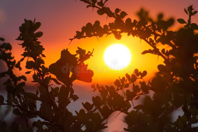 Tropischer Sommer verzweigt sich und verlässt hintergrundbeleuchtet bei Sonnenuntergang stockbilder