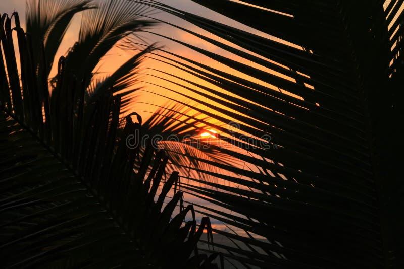 Tropischer Sonnenaufgang durch Palmen auf Strand des Pazifischen Ozeans lizenzfreies stockbild