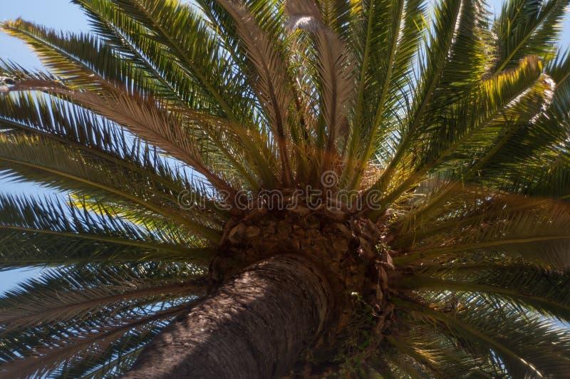 Tropischer Sonnenschein Palmtree lizenzfreies stockfoto