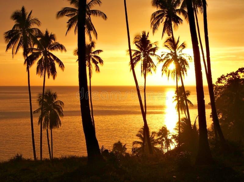 Tropischer Sonnenuntergang mit Baumschattenbild. stockbild