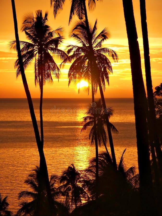 Tropischer Sonnenuntergang mit Palmeschattenbild. stockfotografie