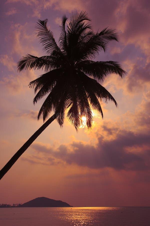 Tropischer Sonnenuntergang Palmen auf dem Hintergrund des Pazifischen Ozeans thailand stockbild