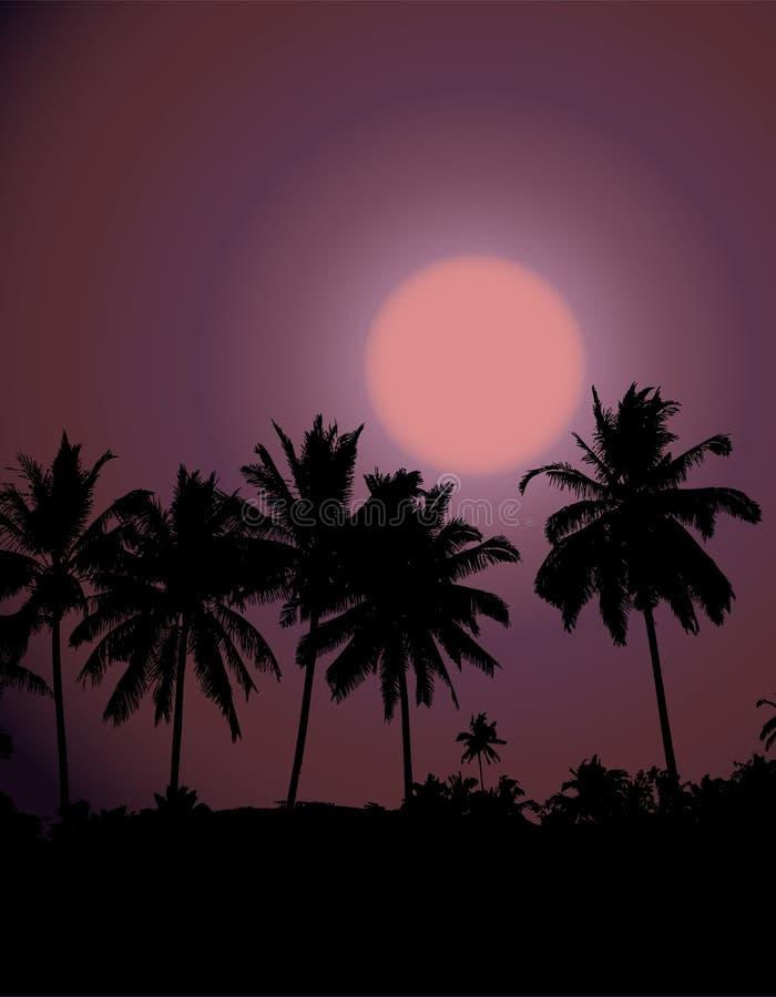 Tropischer Sonnenuntergang, Palmeschattenbild lizenzfreie abbildung