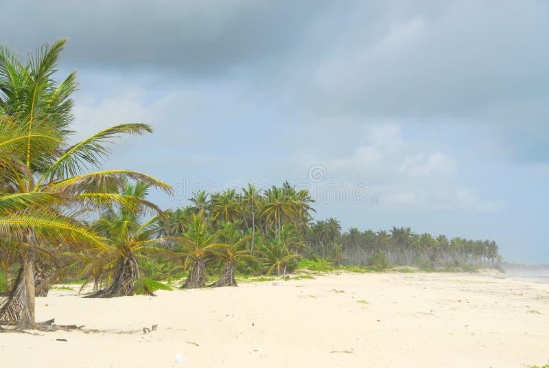 Tropischer Strand Kostenloses Stockfoto