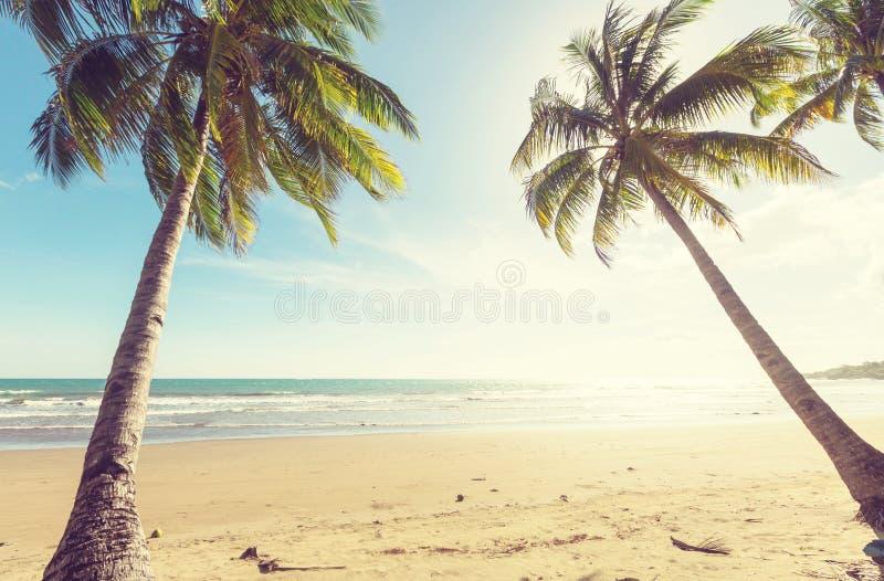 Download Tropischer Strand stockbild. Bild von sand, erholung - 90227505
