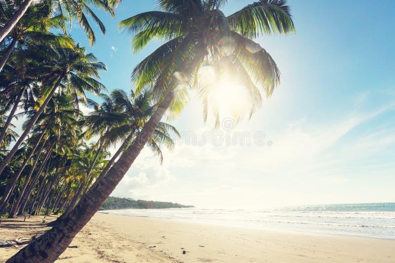 Download Tropischer Strand stockbild. Bild von hintergrund, ozean - 90228169