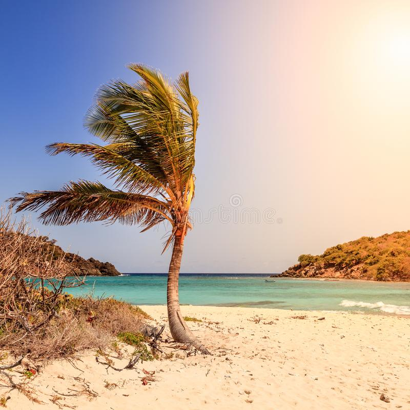 Tropischer Strand auf einer Insel stockfoto