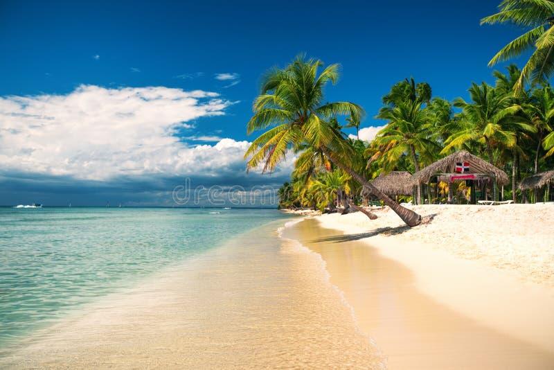 Tropischer Strand auf Saona-Insel, Dominikanische Republik lizenzfreie stockfotos