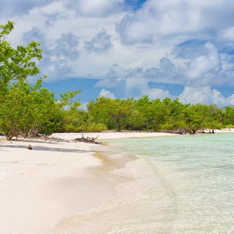 Tropischer Strand der Jungfrau mit Bäumen nahe dem Wasser am Coco-Schlüssel in C stockfotografie