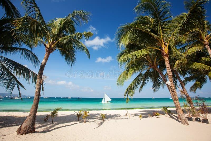 Tropischer Strand mit schönen Palmen und weißem Sand lizenzfreie stockfotos