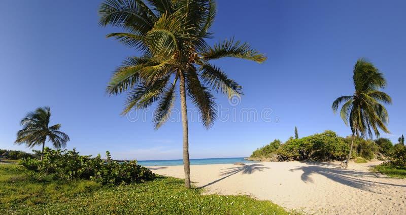 Tropischer Strand mit Vegetationpanorama stockbild
