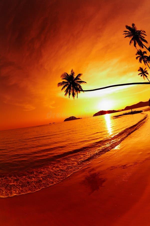 Tropischer Strand am Sonnenuntergang lizenzfreie stockfotografie