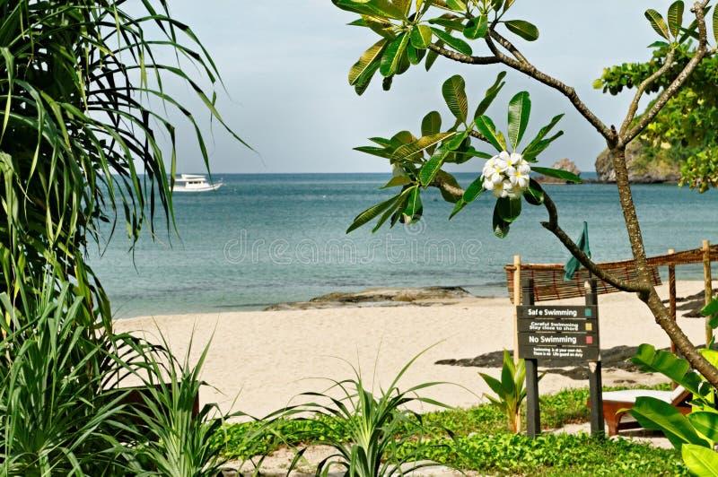 Tropischer Strand in Thailand stockfotos