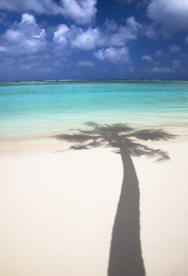 Tropischer Strand und Schatten der Kokosnuss lizenzfreies stockfoto